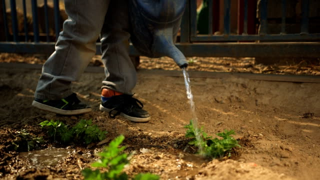 low angled shot of child watering vegetable patch/ diepsloot/ south africa - watering can stock videos and b-roll footage
