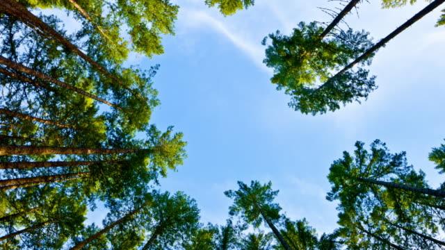Niedrige Anglw Blick auf den Wald