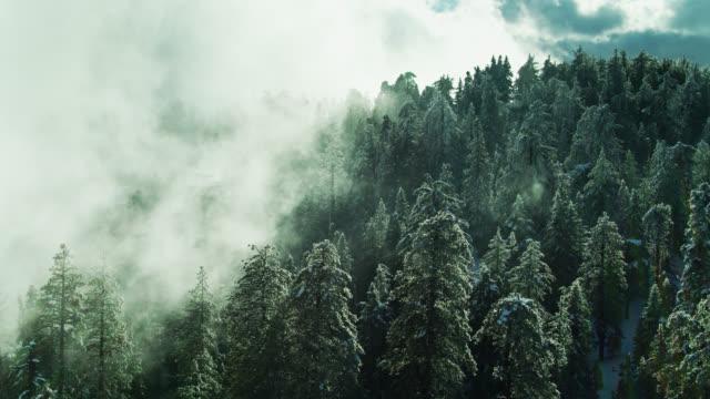 冬の木の上に吹く低い雲 - エンジェルス国有林点の映像素材/bロール