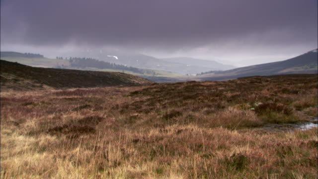 low cloud over wet moorland in rain, cairngorms, scotland - 荒野点の映像素材/bロール