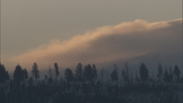 Low clouds drift over snowy forest, Yellowstone, USA