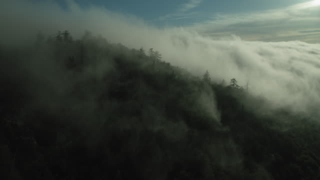 vídeos de stock, filmes e b-roll de low clouds over forested mountainside in ca - ambiente dramático