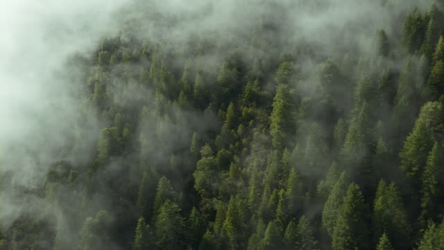 low clouds sink over a forest of coast redwoods, del norte county, california. - california del norte stock videos & royalty-free footage