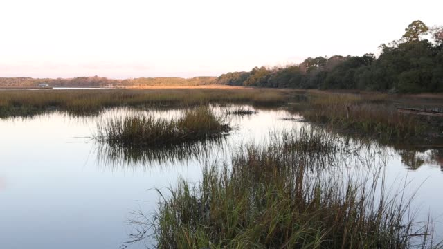 low country marsh  at sunrise - south carolina stock videos & royalty-free footage