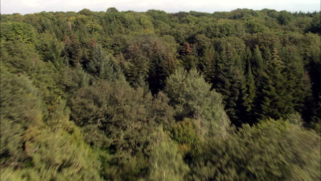 low flight over woods south of demigny  - aerial view - bourgogne, saône-et-loire, france - low stock videos and b-roll footage