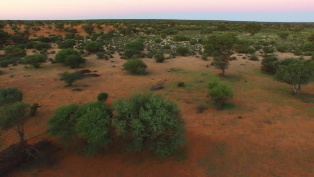 low level aerial drone track over south african desert with trees at dawn - desert stock videos & royalty-free footage