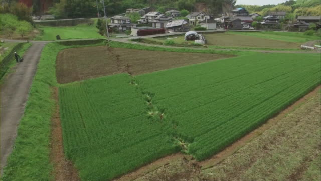 Low level aerial view of a long surface rupture running through a large agricultural field along fault line in the FutagawaHinagu Fault zone in...