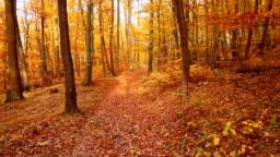 Low level flight inside autumn forest