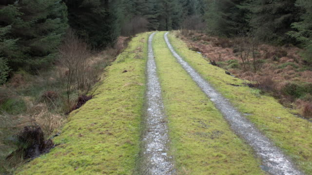 vídeos de stock e filmes b-roll de low level view captured by a drone of a track through a scottish pine forest in winter - johnfscott