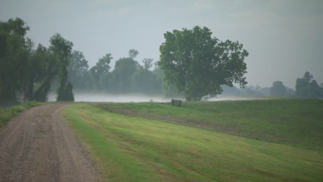 WS Low mist hovers above Mississippi river surface in distance from rural path / New Orleans, Louisiana, United States