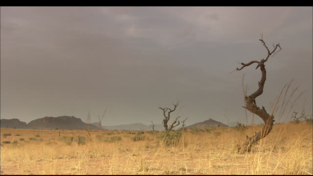 low mountains rise beyond the savannah in mali. available in hd. - マリ点の映像素材/bロール