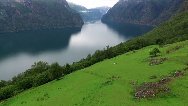 Low of Hillside with Fjord in Background
