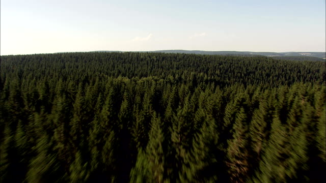 low over forest  - aerial view - thuringia,  germany - turingia video stock e b–roll