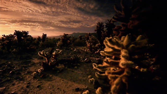 stockvideo's en b-roll-footage met low point of view through joshua tree national park at dusk - joshua tree national park