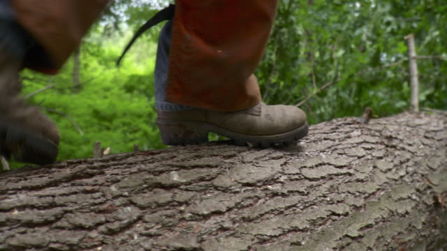 ms pan low section of logger walking across freshly fallen tree, stowe, vermont, usa - log stock videos & royalty-free footage