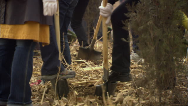 cu low section of people digging holes in dirt to plant trees / beijing, china - 植える点の映像素材/bロール