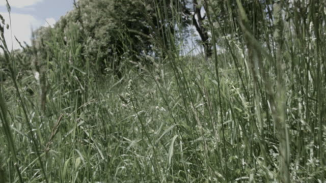 low pov shot moving through long grass on a sunny day, austria. - footpath stock-videos und b-roll-filmmaterial