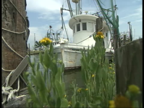 low shot of a docked fishing boat with flowers waving in the wind on sunny day after british petroleum oil spill - gulf coast states stock videos & royalty-free footage