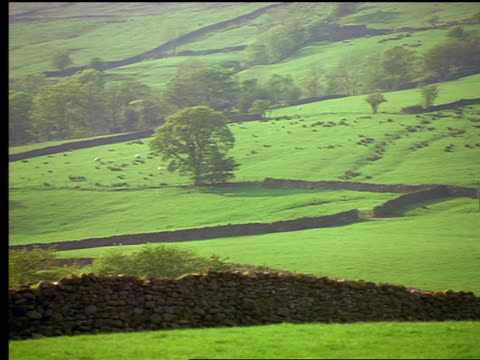 vídeos y material grabado en eventos de stock de pan low stone walls stretching across grassy hill landscape / yorkshire dales / england - yorkshire