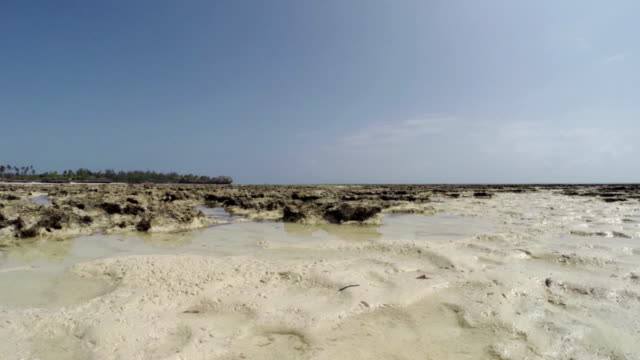 Low Tide in Zanzibar - Pongwe Bay