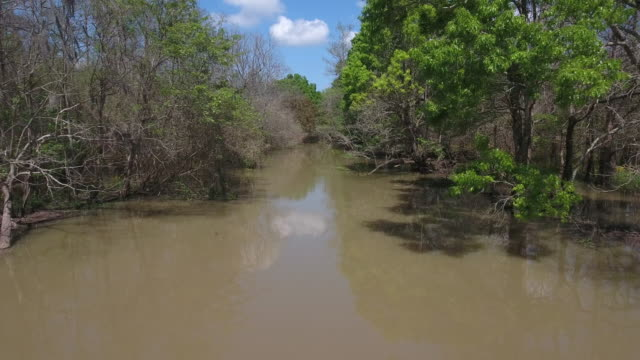 low tight long flight in swamp- drone aerial 4k everglades, swamp bayou with wildlife alligator nesting ibis, anhinga, cormorant, snowy egret, spoonbill, blue heron, eagle, hawk, cypress tree - drone aerial view - bayou lafourche stock-videos und b-roll-filmmaterial