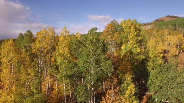 low to high close to aspen tree reveal, aerial, 4k, 37s, 21of34, aspen trees, foliage, mountains, beautiful colors, changing leaves, colorado, aerial, stock video sale - drone discoveries 4k nature/wildlife/weather drone aerial video - aspen tree stock videos & royalty-free footage