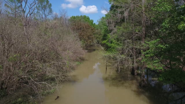 low to high rise reveal swamp - drone aerial 4k everglades, swamp bayou with wildlife alligator nesting ibis, anhinga, cormorant, snowy egret, spoonbill, blue heron, eagle, hawk, cypress tree - drone aerial view - bayou lafourche stock-videos und b-roll-filmmaterial