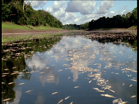 Low track over lake full of dead suffocated fish