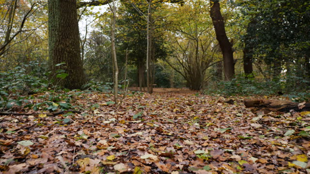 low track shot along autumn woodland path - surface level stock videos & royalty-free footage