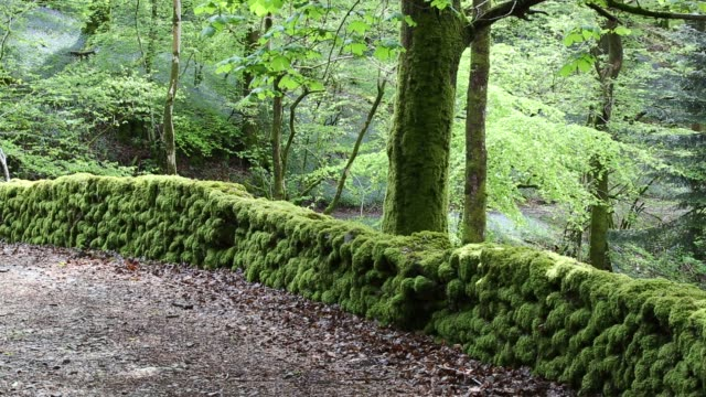 low wood, below high close, near ambleside, lake district, uk. - footpath stock videos & royalty-free footage