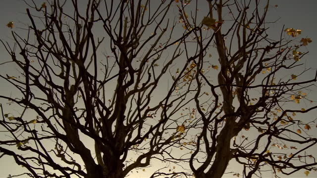 low-angle, plane trees with few leaves, tokyo, japan - bare tree stock videos & royalty-free footage
