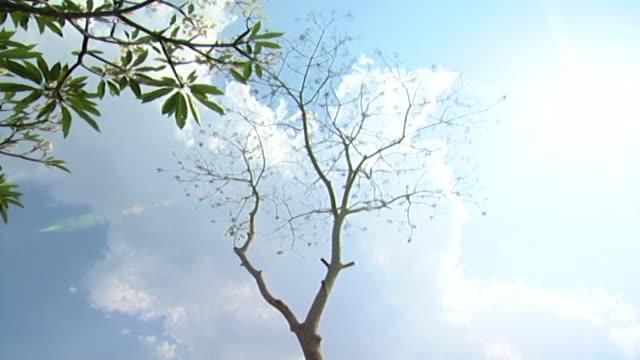 stockvideo's en b-roll-footage met lowangle view of a bare tree - bare tree