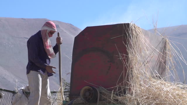 low-angle view of a farmer using a pitchfork to place wheat in a vintage belt-driven threshing machine, in rural northern mount lebanon. - pitchfork stock videos & royalty-free footage