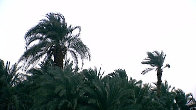 lowangle view of palm trees swaying in the breeze - swaying stock videos & royalty-free footage