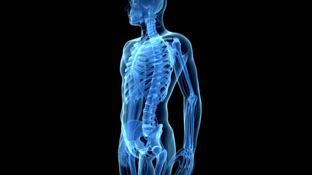 lower back pain - human bone stock videos & royalty-free footage
