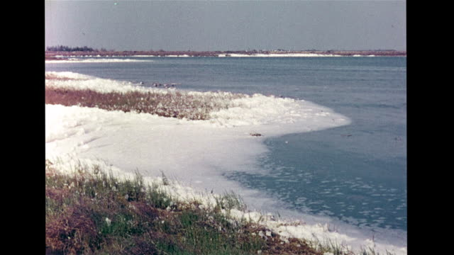 lowlands beyond dunes low plants clusters ha brine pond vs greater flamingo colony standing in water ws flamingos walking in water fg others in... - camargue stock-videos und b-roll-filmmaterial