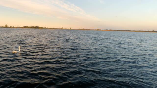 Lubana lake and two swans