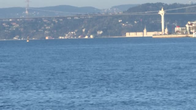 lull in boat traffic and a ban on fishing in istanbul forced by the coronavirus has proved good news for some of the city's longest-standing and... - dolphin stock videos & royalty-free footage
