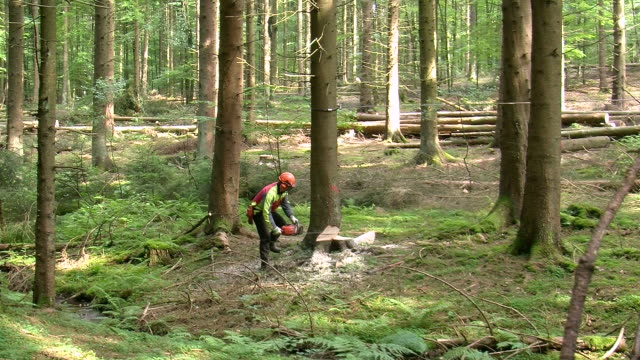 ws lumberjack at work in forest / zerf, rhineland palatinate, germany  - lumberjack stock videos & royalty-free footage