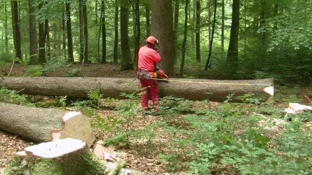 ms  lumberjack at work in forest / zerf, rhineland palatinate, germany - gemeinsam gehen stock-videos und b-roll-filmmaterial