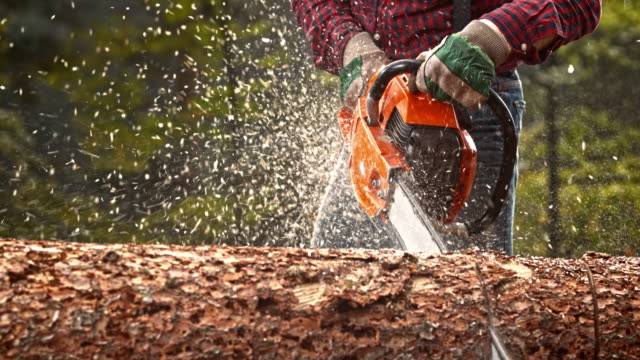 slo mo lumberjack bucking a tree with chainsaw - chainsaw stock videos & royalty-free footage