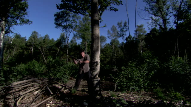 A lumberjack chops a slender tree. Available in HD.