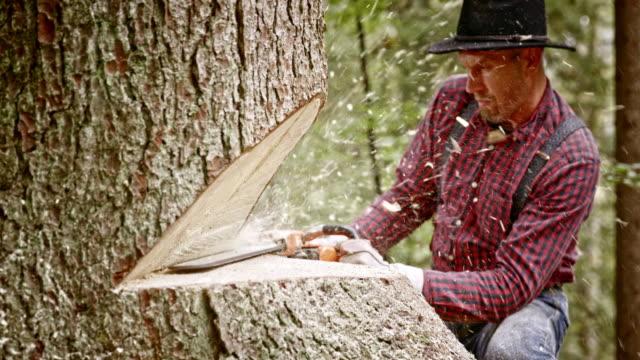 slo mo lumberjack cleaning horizontal cut in the tree - lumberjack stock videos and b-roll footage