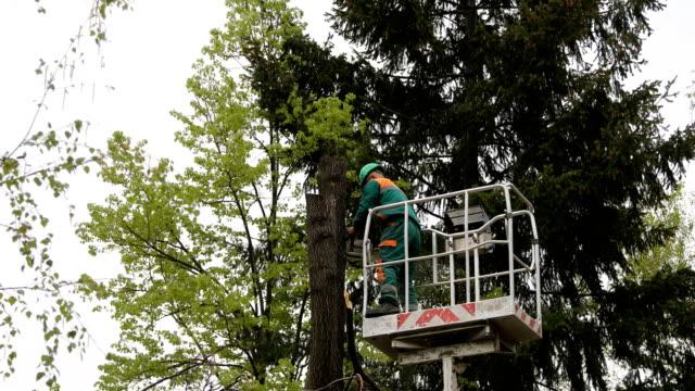 boscaiolo abbattuto un albero sulla piattaforma - gru video stock e b–roll