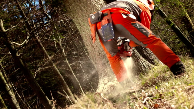 hd: lumberjack cutting a humbolt notch - chainsaw stock videos & royalty-free footage