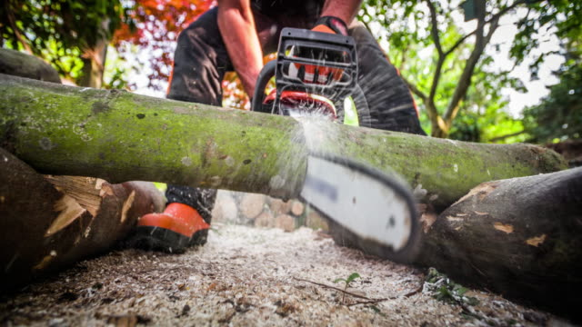lumberjack cutting a tree with a chainsaw - slow motion - forestry industry stock videos & royalty-free footage