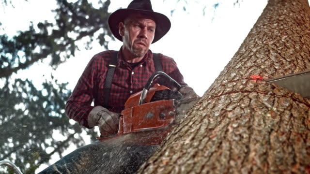 slo mo lumberjack cutting a tree with a chainsaw - lumberjack stock videos & royalty-free footage