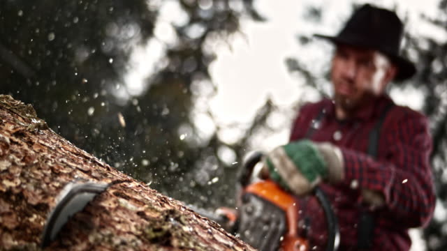 slo mo lumberjack cutting into a tree with a chainsaw - tagliaboschi video stock e b–roll