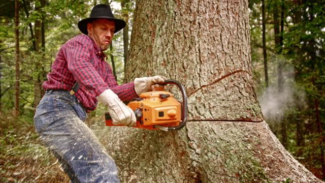 vídeos y material grabado en eventos de stock de slo mo leñador cortar el árbol con una motosierra - leñador