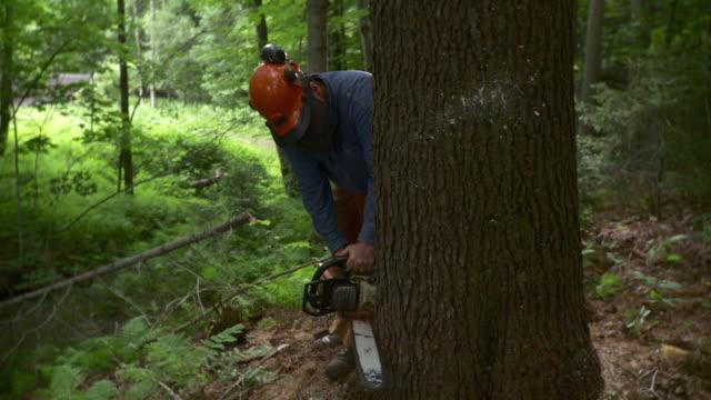 ms lumberjack cutting through large tree in forest, stowe, vermont, usa - dreiviertelansicht stock-videos und b-roll-filmmaterial